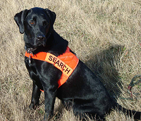 K9-Frankie of Search One